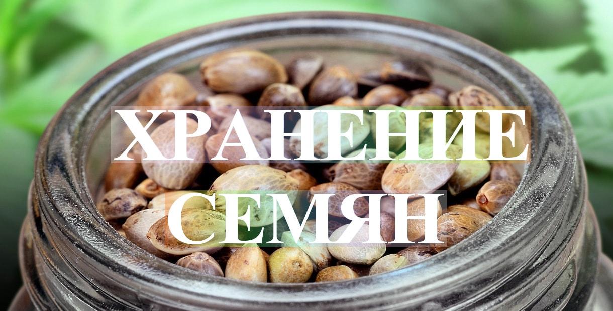 Где и как правильно хранить семена конопли>