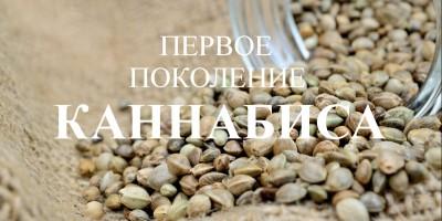 Плюсы семян конопли первого поколения