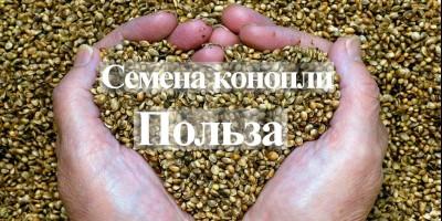 Профит от технических семян конопли