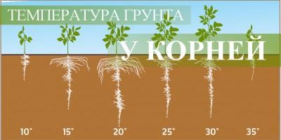 Важливість температури грунту біля коріння коноплі