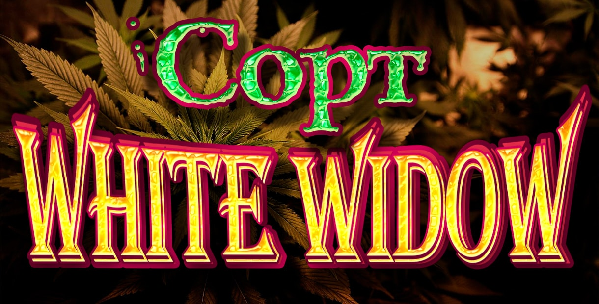 История сорта White Widow