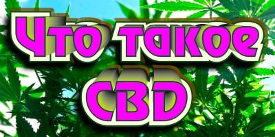 Лечебная марихуана: влияние КБД и ТГК на организм