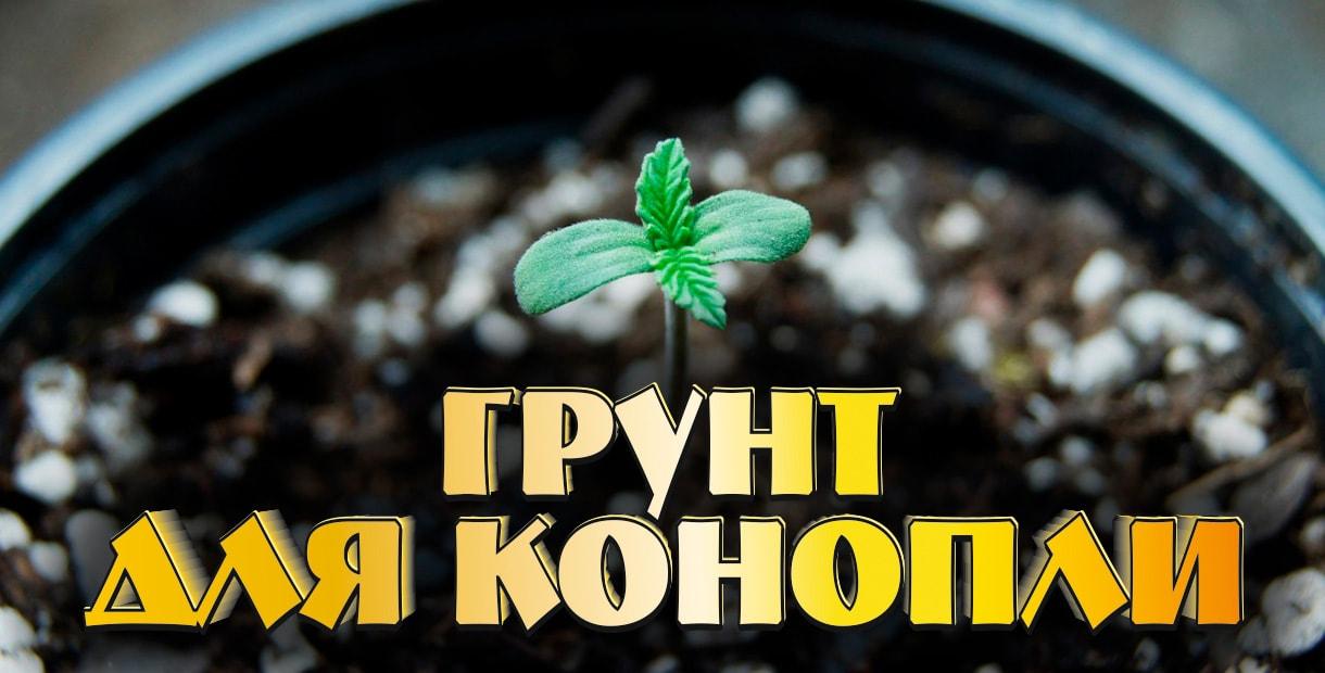 Как подобрать почву для выращивания семян конопли>