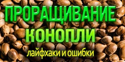 Проращивание конопли: лайфхаки