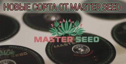 Нові сорти від Master-Seed