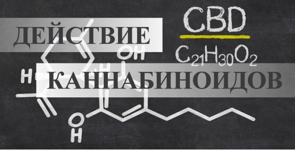Принцип действия и применение каннабиноидов