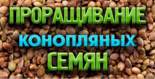 Методи пророщування конопляного насіння