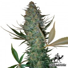 Green Silk Road Auto AK-47 Feminised