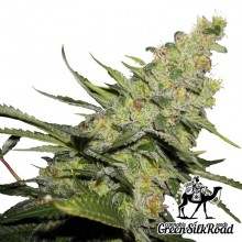 Green Silk Road AK-47 Feminised