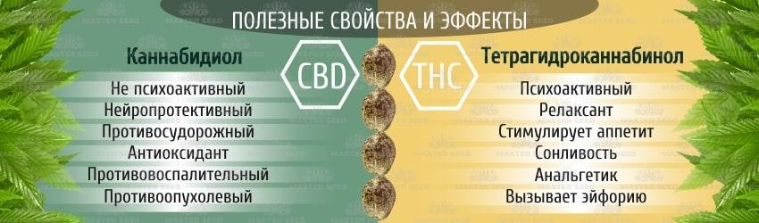 Лечебная марихуана: чем отличаются ТГК и КБД семена конопли