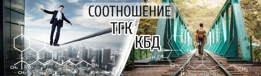 Соотношение КБД и ТГК в конопле