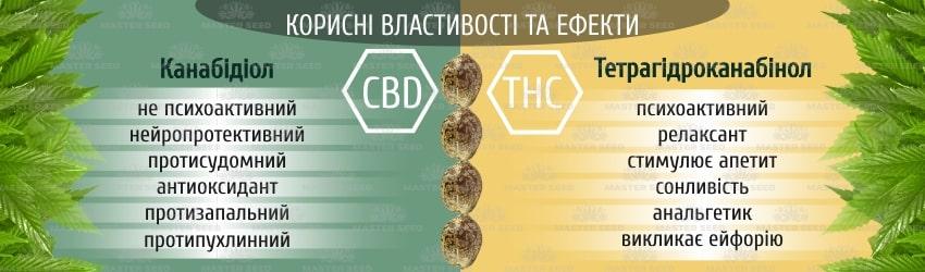 Лікувальна марихуана: чим відрізняються ТГК і КБД насіння конопель