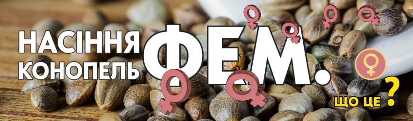 Що значить фемінізовані насіння конопель?