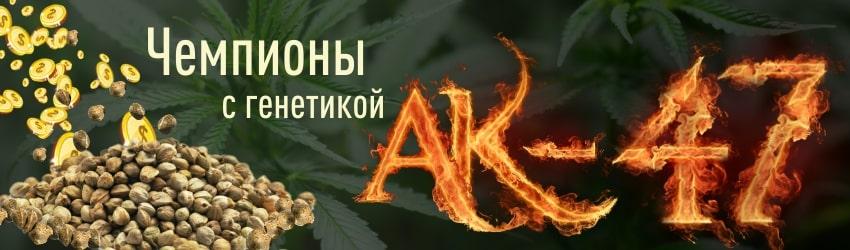 Где купить семена конопли АК-47: популярные сорта