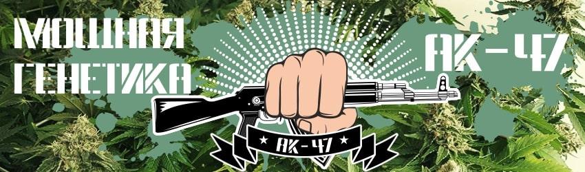 Семена конопли с генетикой АК-47