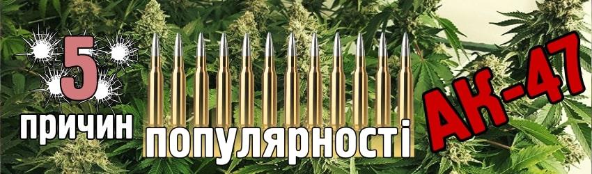 Чому фемінізовані насіння з генетикою АК-47 такі популярні?