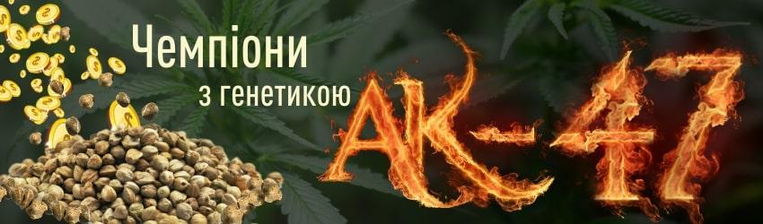 Де купити насіння конопель АК-47: популярні сорти
