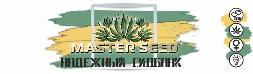 Испанские семена марихуаны от Master Seed