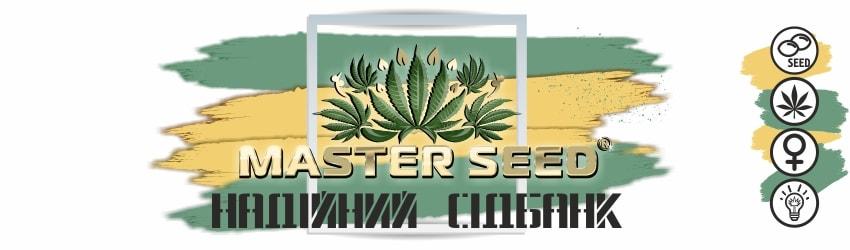 Іспанські насіння марихуани від Master Seed
