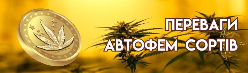 Автоквітучі насіння конопель та їх переваги