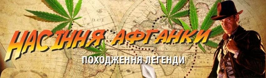 Що таке насіння афганки або афганська конопля?