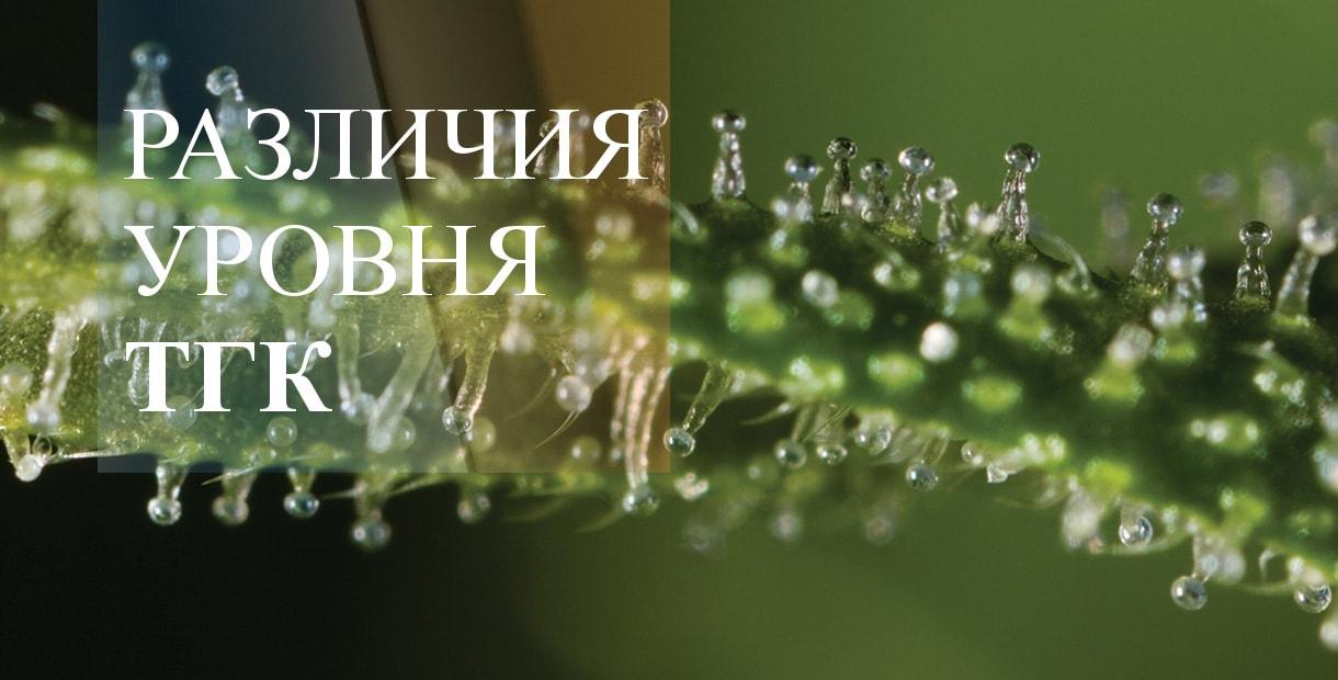Как узнать тгк в конопле символ конопли на ник