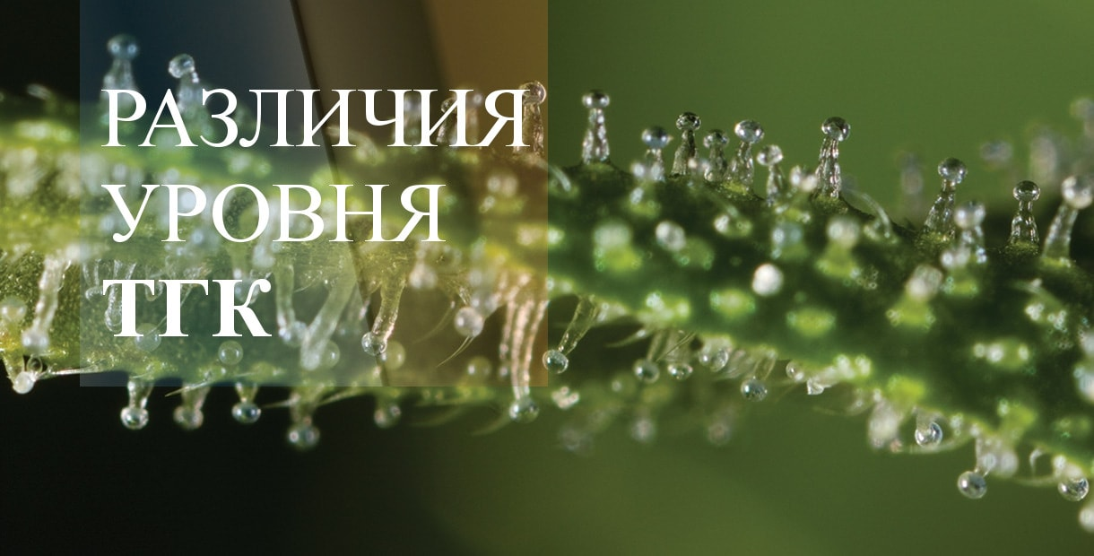 Фото тгк на конопле марихуана боб марли