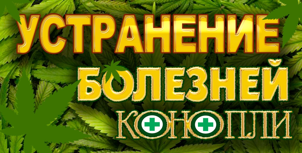 Болезни курильщиков марихуаны марихуана клипарт