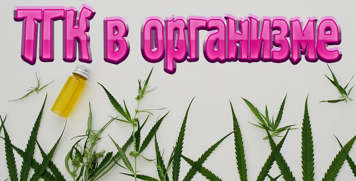 Сколько максимум марихуана держится в моче если плохо от конопли что делать