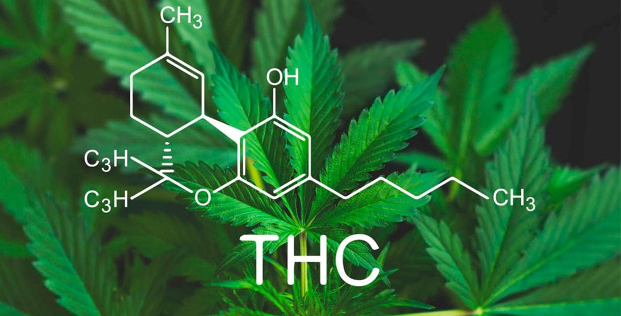 Конопля химические свойства страна с легализованной марихуаной
